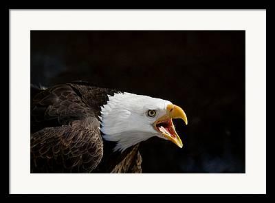 Eagle Photographs Framed Prints