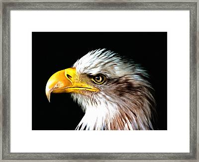 Bald Eagle Portrait Framed Print by Georgiana Romanovna