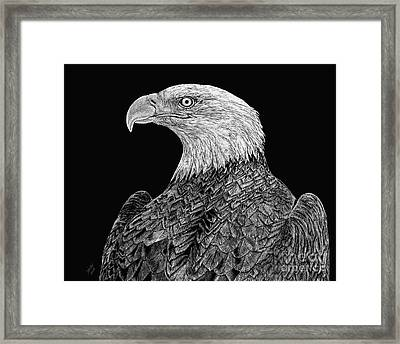 Bald Eagle Scratchboard Framed Print