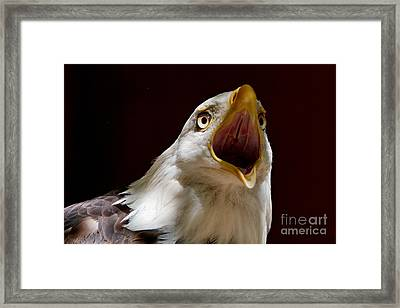 Bald Eagle - The Great Call Framed Print