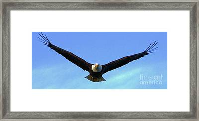 Bald Eagle Victory Framed Print by Dean Edwards