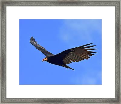 Bald Is Beautiful Framed Print by Tony Beck