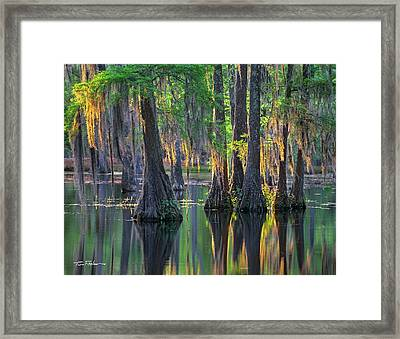 Baldcypress Trees, Louisiana Framed Print