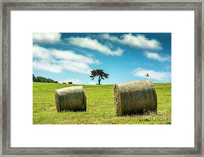 Bales Of Straw In A Field, Auvergne, France Framed Print by Bernard Jaubert