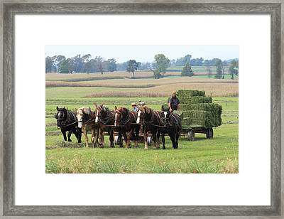 Baling The Hay Framed Print by Lou Ford