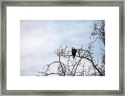 Framed Print featuring the photograph Balk Eagle by Rebecca Cozart