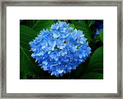 Framed Print featuring the photograph Ball Of Blue by Michiale Schneider