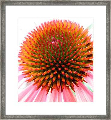 Ball Of Fire Framed Print by Jeanette Oberholtzer