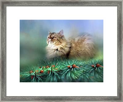 Ball Of Fluff Cat Art Framed Print by Georgiana Romanovna