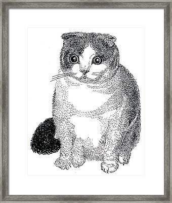 Ball Of Furry Fun Framed Print