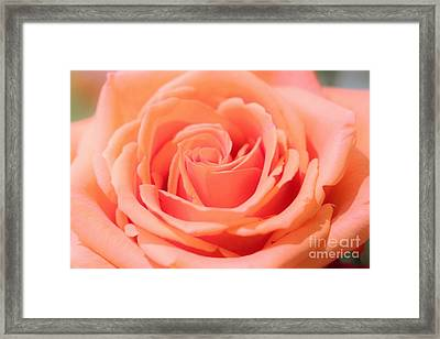 Ballet Pink Satin Rose Framed Print