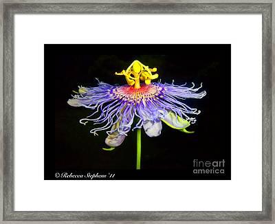 Ballet Framed Print by Rebecca Stephens