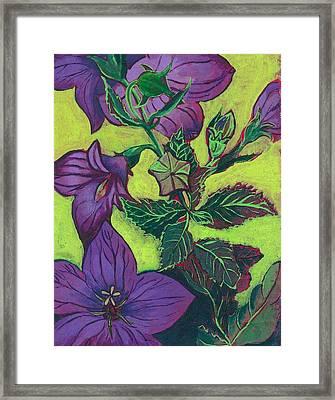 Balloon Flowers Framed Print by Julia Garnett