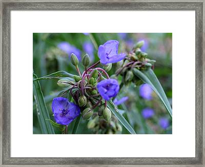 Framed Print featuring the photograph Balmy Blue by Michiale Schneider