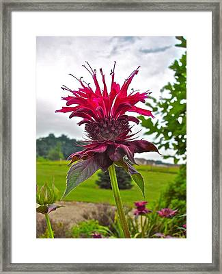 Balmy Weather Framed Print