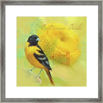 Framed Print featuring the photograph Baltimore Oriole Watercolor Photo by Heidi Hermes