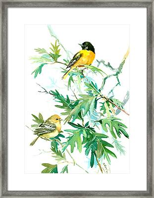 Baltimore Orioles And Oak Tree Framed Print by Suren Nersisyan