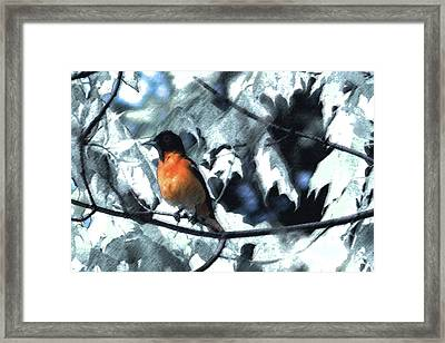 Baltimore Orioles Dream Framed Print by Nancy TeWinkel Lauren