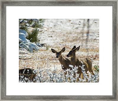 Bambi And Bimbo Framed Print