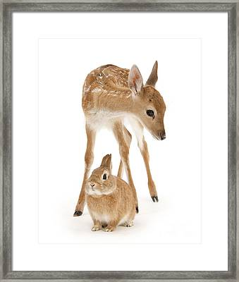 Bambi And Thumper Framed Print
