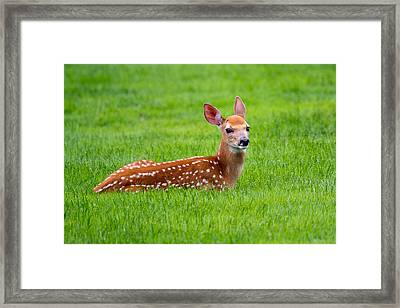 Bambi At Rest Framed Print by Timothy McIntyre