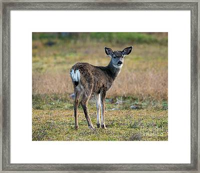 Bambi Framed Print by Mike Dawson