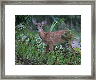 Framed Print featuring the photograph Bambi by Rick Friedle