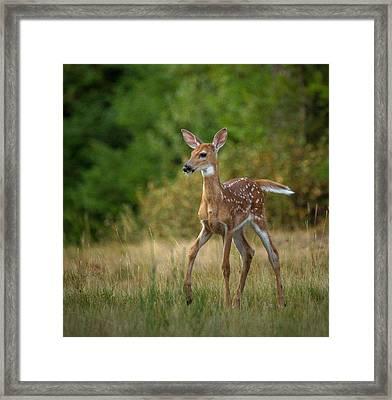 Bambi // Whitefish, Montana  Framed Print