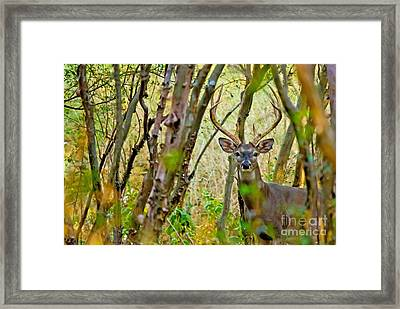Bambi's Father Framed Print
