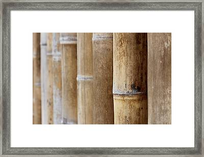 Bamboo 2 Framed Print by Heike Hultsch