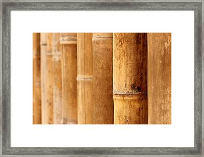 Bamboo 4 Framed Print by Heike Hultsch