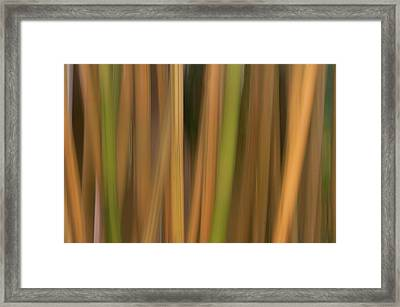 Bamboo Abstract Framed Print by Carolyn Dalessandro