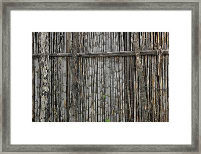 Bamboo And Barbed Wire Fence Framed Print