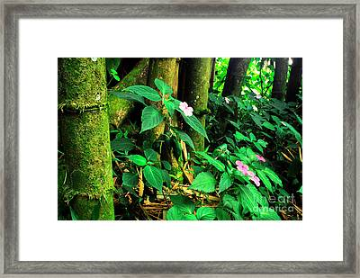 Bamboo And Impatiens El Yunque National Forest Framed Print by Thomas R Fletcher