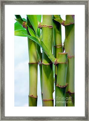 Bamboo And Sky Framed Print by Olivier Le Queinec