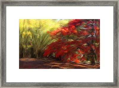Bamboo And The Flamboyant Framed Print