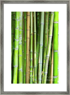Bamboo Background Framed Print by Carlos Caetano