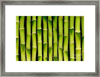 Bamboo Bamboo Bamboo Framed Print