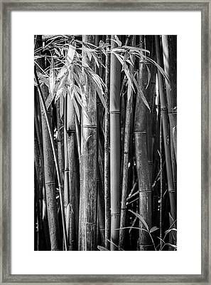 Bamboo Black And White Framed Print by Kelley King