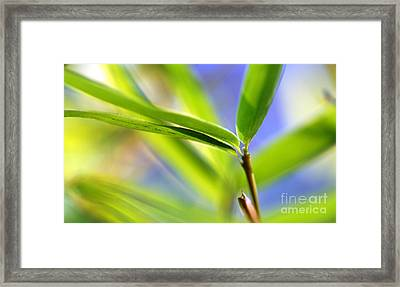 Bamboo Framed Print by Catherine Lau