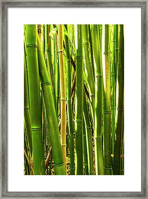 Bamboo Cluster Framed Print by Kelley King