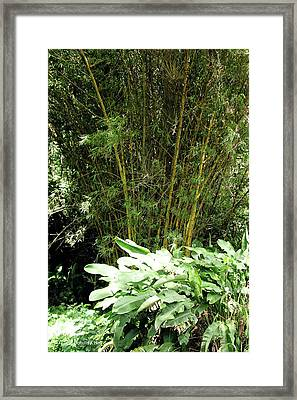 F8 Bamboo Framed Print by Donald k Hall