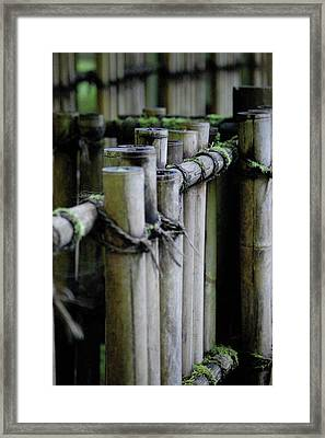 Bamboo Fence Framed Print by Samantha Kimble