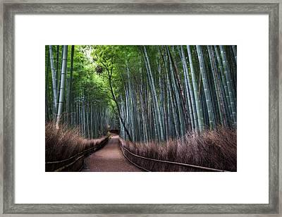 Bamboo Forest Entrance Framed Print