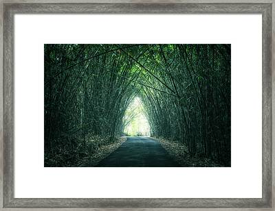 Bamboo Forest Framed Print by Joana Kruse