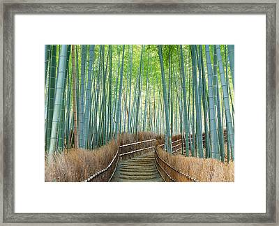 Bamboo Forest, Kyoto City, Kyoto Framed Print by Panoramic Images