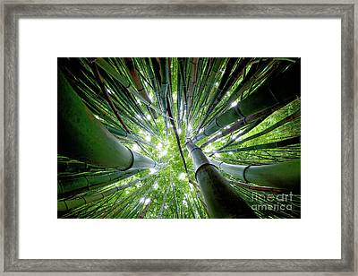 Bamboo Forest Maui  Framed Print by Monica and Michael Sweet