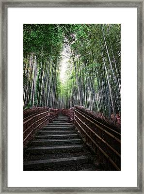 Bamboo Forest Of Japan Framed Print
