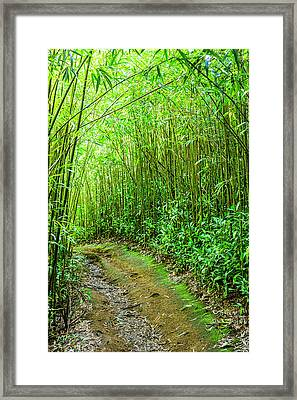 Bamboo Forest Trail Framed Print by Kelley King