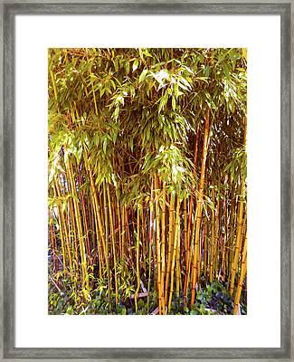 Bamboo Grove Framed Print by Ann Johndro-Collins